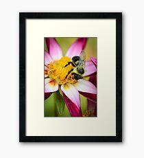 Bumblebee 2 Framed Print