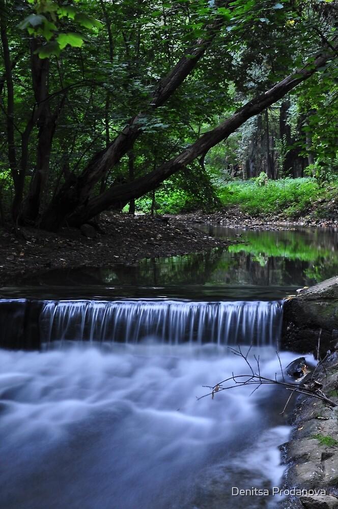 The stream by Denitsa Prodanova