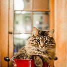 the cat in the pot by Fidisoa Rasambainarivo