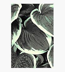 Leaves - 2 (duotone) Photographic Print