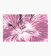 Geranium (duotone - digital sketch) Photographic Print