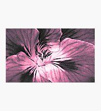 Geranium  (duotone) Photographic Print