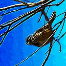 Singing Song Sparrow 3 Abstract Impressionism by pjwuebker