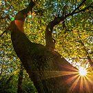 Lionwood Sunset by Nick Jermy