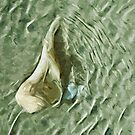 Sea Shell in Moving Water Abstract Impressionism by pjwuebker