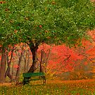 Under The Apple Tree by JHRphotoART