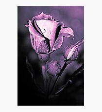 Rosebuds  (duotone) Photographic Print