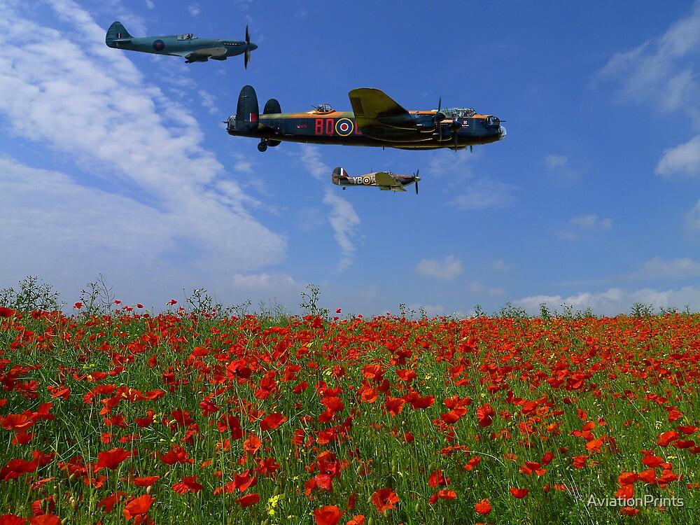 BBMF over the Poppy Field by AviationPrints