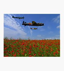 BBMF over the Poppy Field Photographic Print