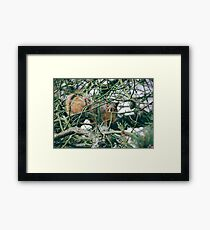 Neighborhood Squirrel Framed Print