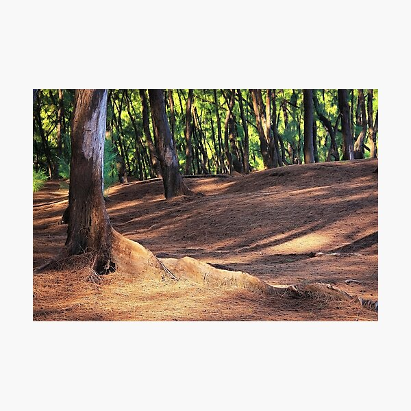 Kaloli Point 2 Photographic Print