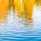 A seagull resting at the surface of a lake by OlivierImages