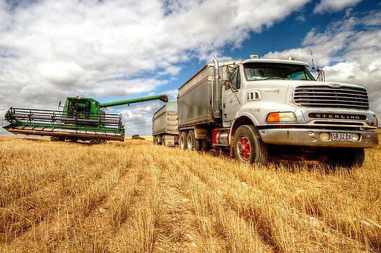 Harvest Time by Dave  Hartley