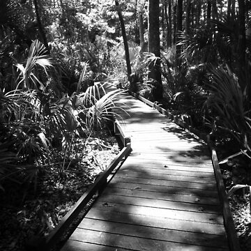 Forest Walk Artistic Photograph by Shannon Sears by twobrokesistas