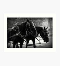Black Percheron Draft Horse Team Art Print