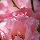 Untouched Beauty by Lozzar Flowers & Art