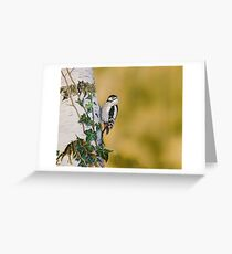 Great-Spotted Woodpecker on Silver Birch Greeting Card
