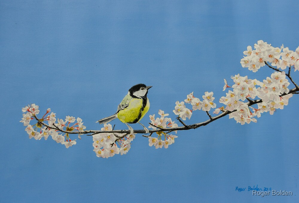 Great Tit on Cherry by Roger Bolden
