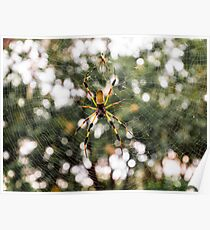 Golden Silk Orb-weaver Poster