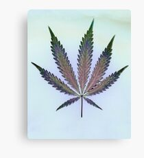 Hemp Lumen #7   Marijuana, Cannabis Canvas Print