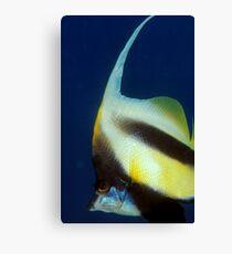 bannerfish Canvas Print