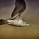 Seagull Oil by Deborah  Benoit