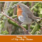 Robin in Hedge at Garstang, Lancashire, by Lilian Marshall