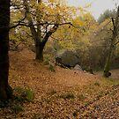 Gawton Rock by hary60