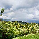 Banyuatis View by jayneeldred