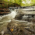 Holywell Dene Water by Harry Purves