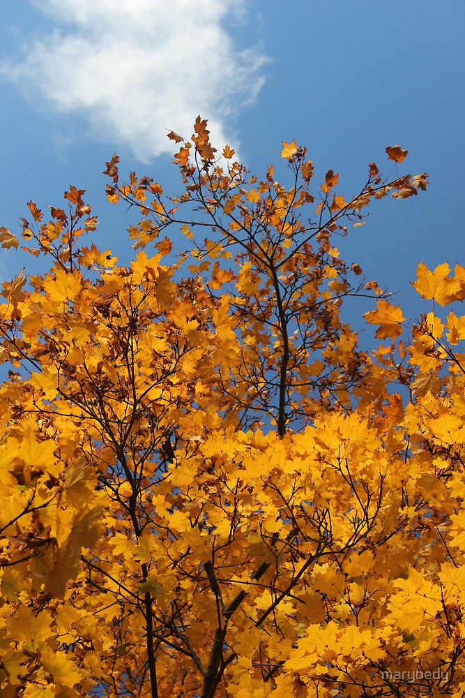 Fall In My Back Yard 1 by marybedy