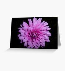 Lavender Dahlia Greeting Card
