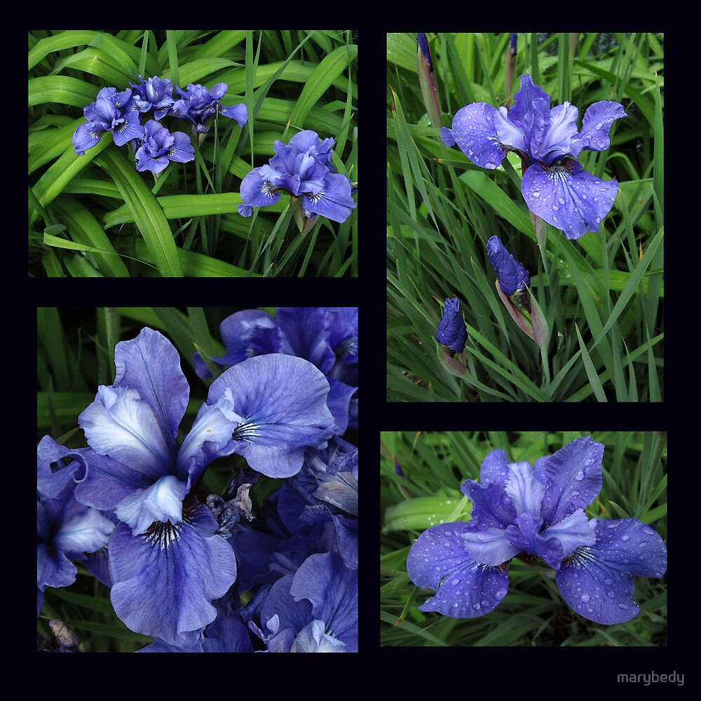 Iris Collage by marybedy