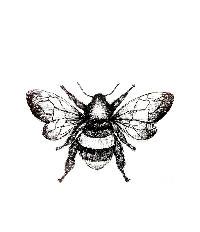 Black And White Bumble Bee Drawing By Art Soul