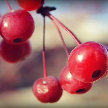 Cherry by sunsetnurveins