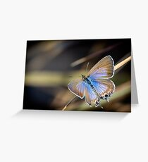 Cycad Blue Butterfly Greeting Card
