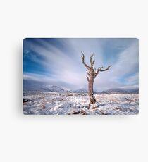 Rannoch moor tree Metal Print