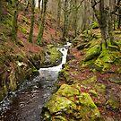The Wicklow Mountains - Ireland by mattnnat