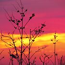 Sunset Silhouette by lorilee