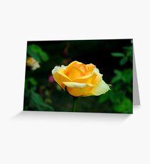 Yellow Rose in Full Bloom Greeting Card