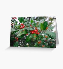 Beautiful Holly Tree with Berries Greeting Card