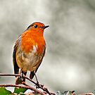 Robin on Ivy by Heather Buckley
