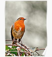Robin on Ivy Poster