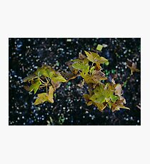 black currant  Photographic Print