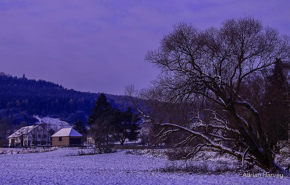 Christmas by Adrian Harvey