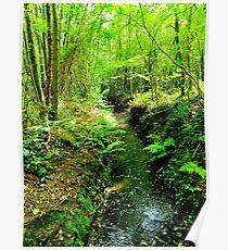 Woodland Stream Poster