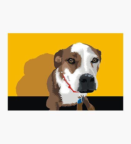 Polly the Wonder Dog Photographic Print