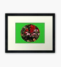 Begonias Vignette Framed Print