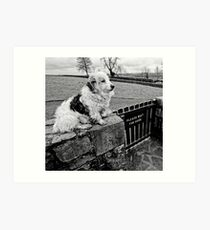 Existential Dog - waiting for guidance. Art Print