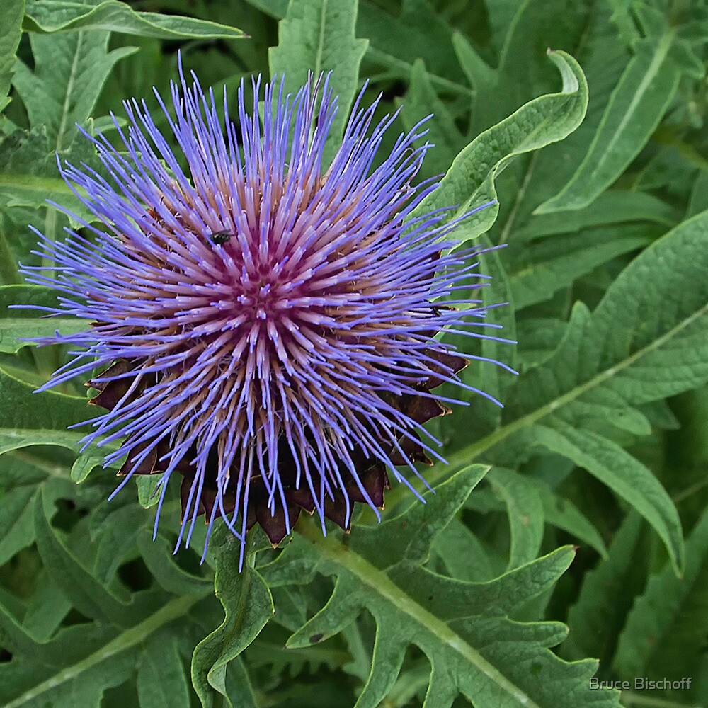 Cardoon and Fly by Bruce Bischoff